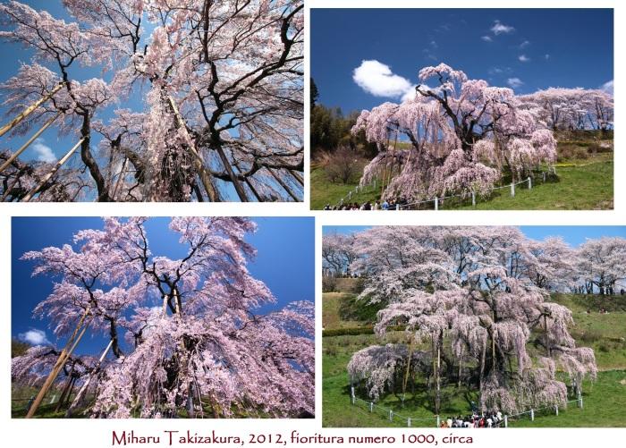 Miharu Takizakura (Fukushima Prefecture, Miharu Town)